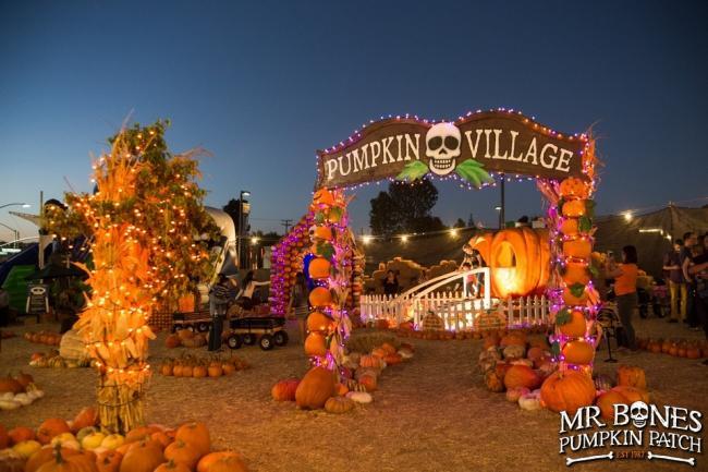 Pumpkin-Village-Night-16.jpg