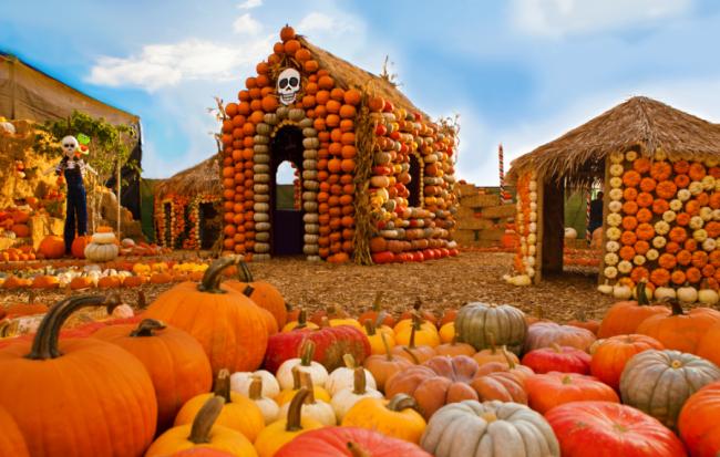 mr-bones-pumpkin-patch-culver-city.png